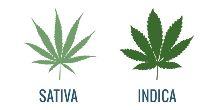 סאטיבה או אינדיקה – מהו סוג הקנאביס המתאים עבורך?